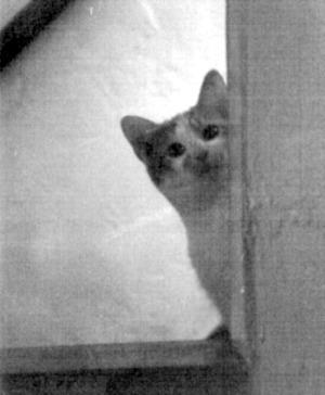 black and white photo of kitten on steps