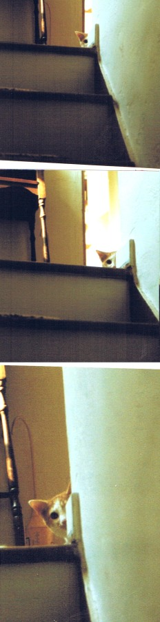 three photos of a cat on steps
