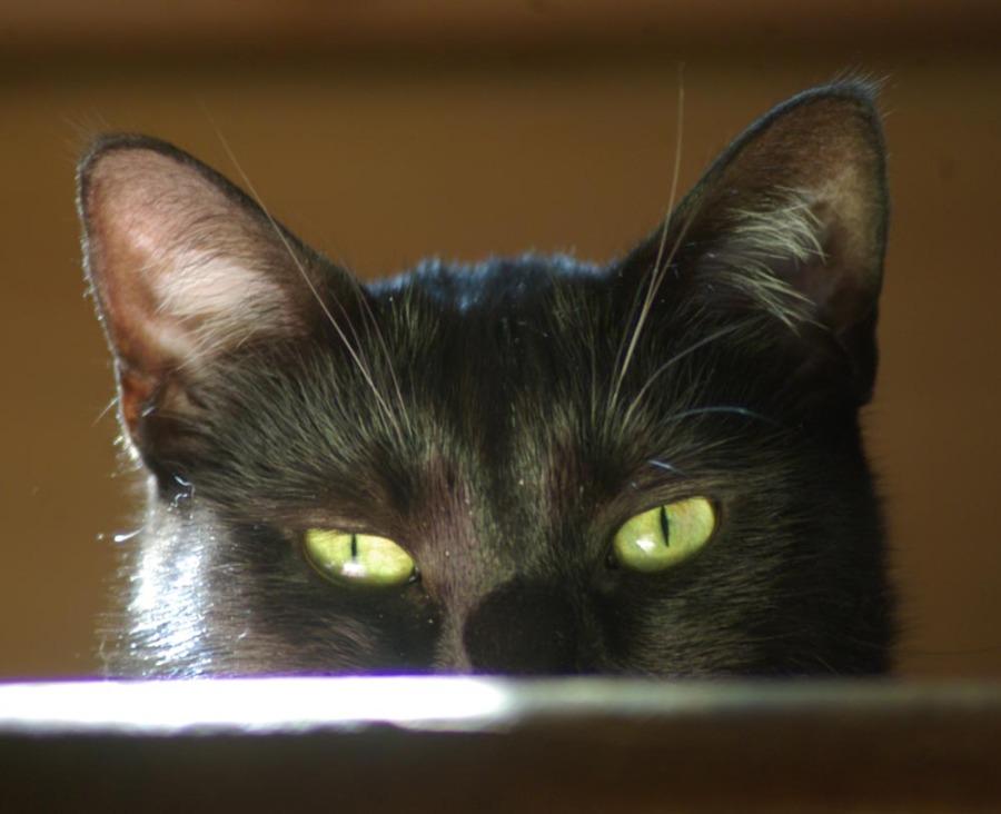 black cat at top of steps