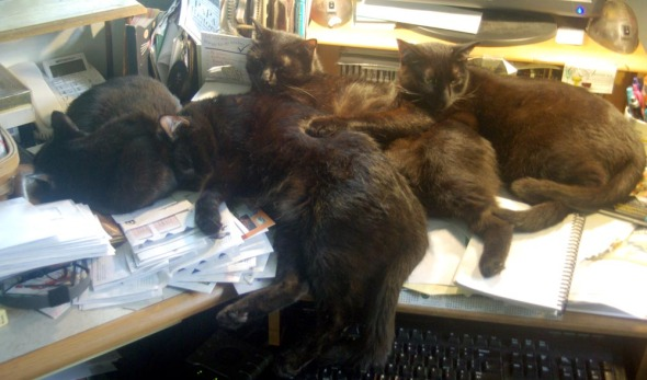 four black cats sleeping on desk.