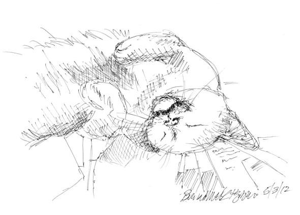 sketch of cat sleeping