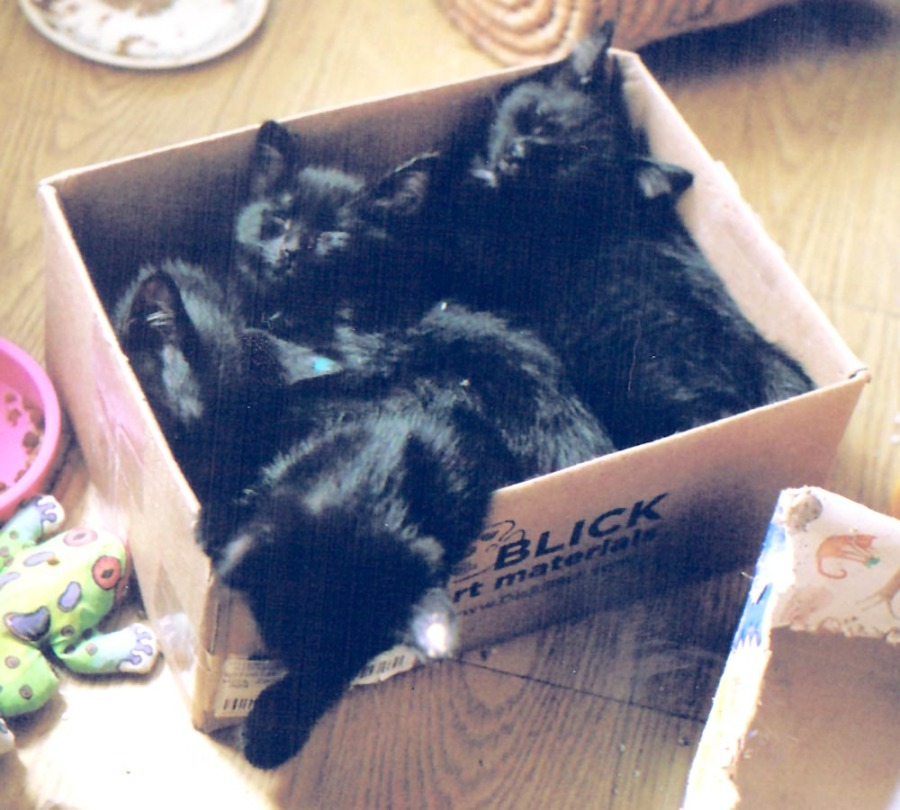 four kittens in box