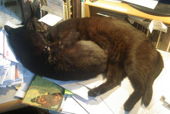 two black cats cuddling