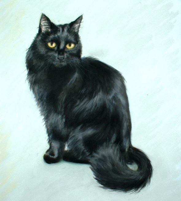 pastel portrait of long-haired black cat