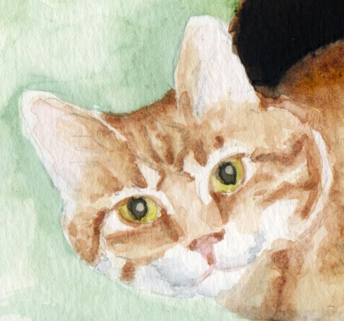 detail of orange cat's face
